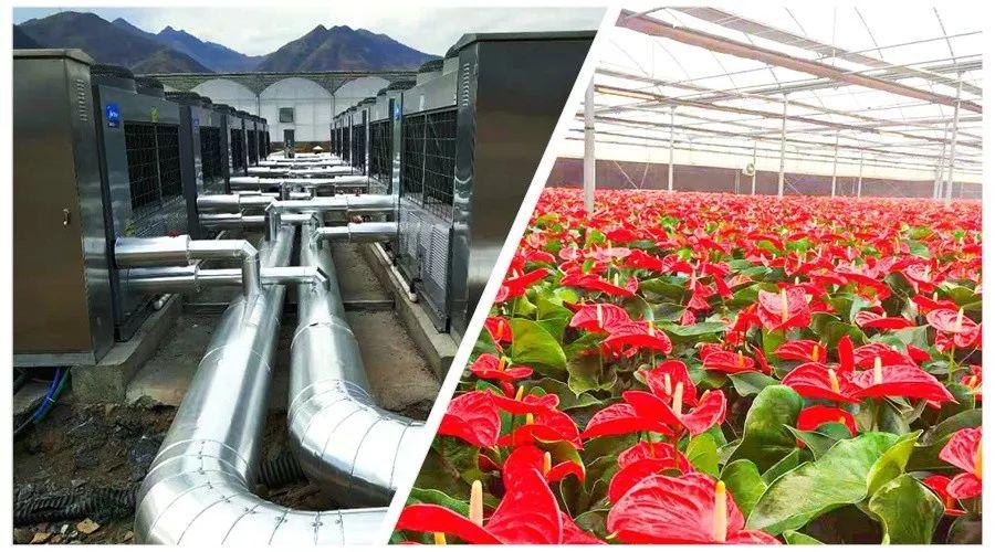 記者實訪:這4個花卉大棚,煤或燃氣改熱泵供暖,費用如何?