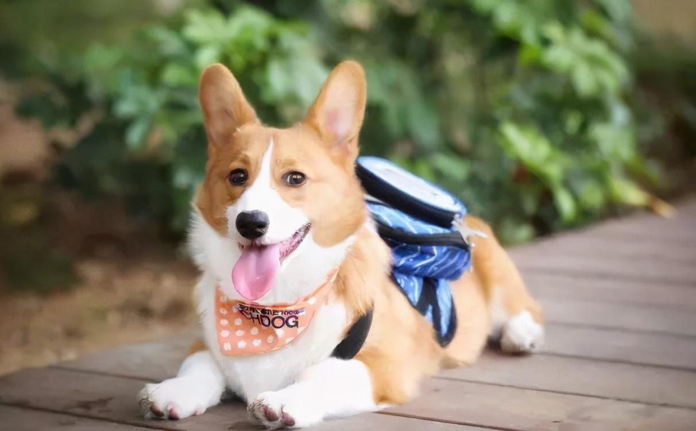 """来自资深养狗师的忠告:养一只宠物犬,做好这6个""""准备"""""""