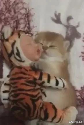 喵咪抱小娃睡觉,网友:萌到老娘的少女心了