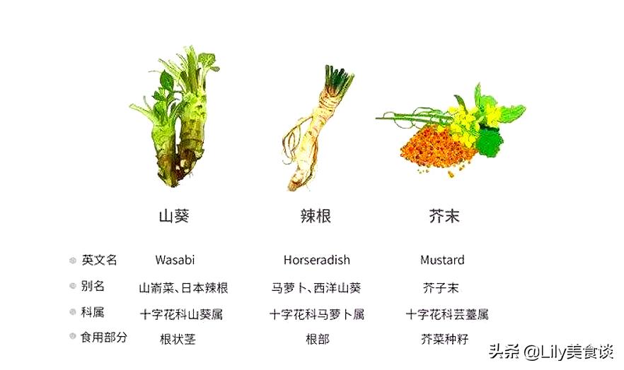 芥末究竟是用什麼做的? 黃、青、綠芥末都有何區別? 看完長見識了