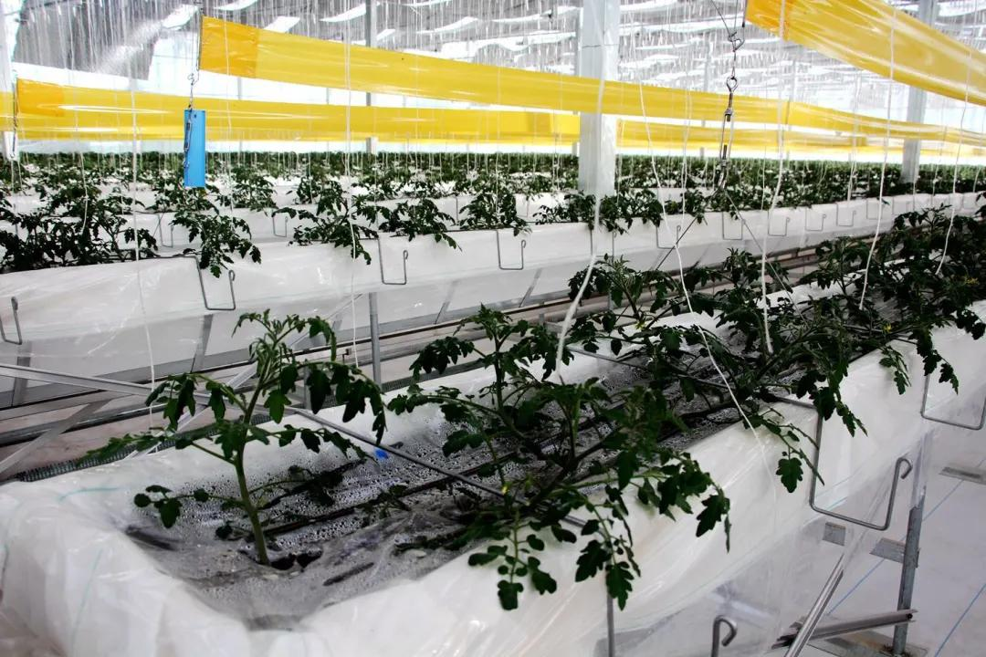 智能温室大棚引领蔬菜产业走向优质高效