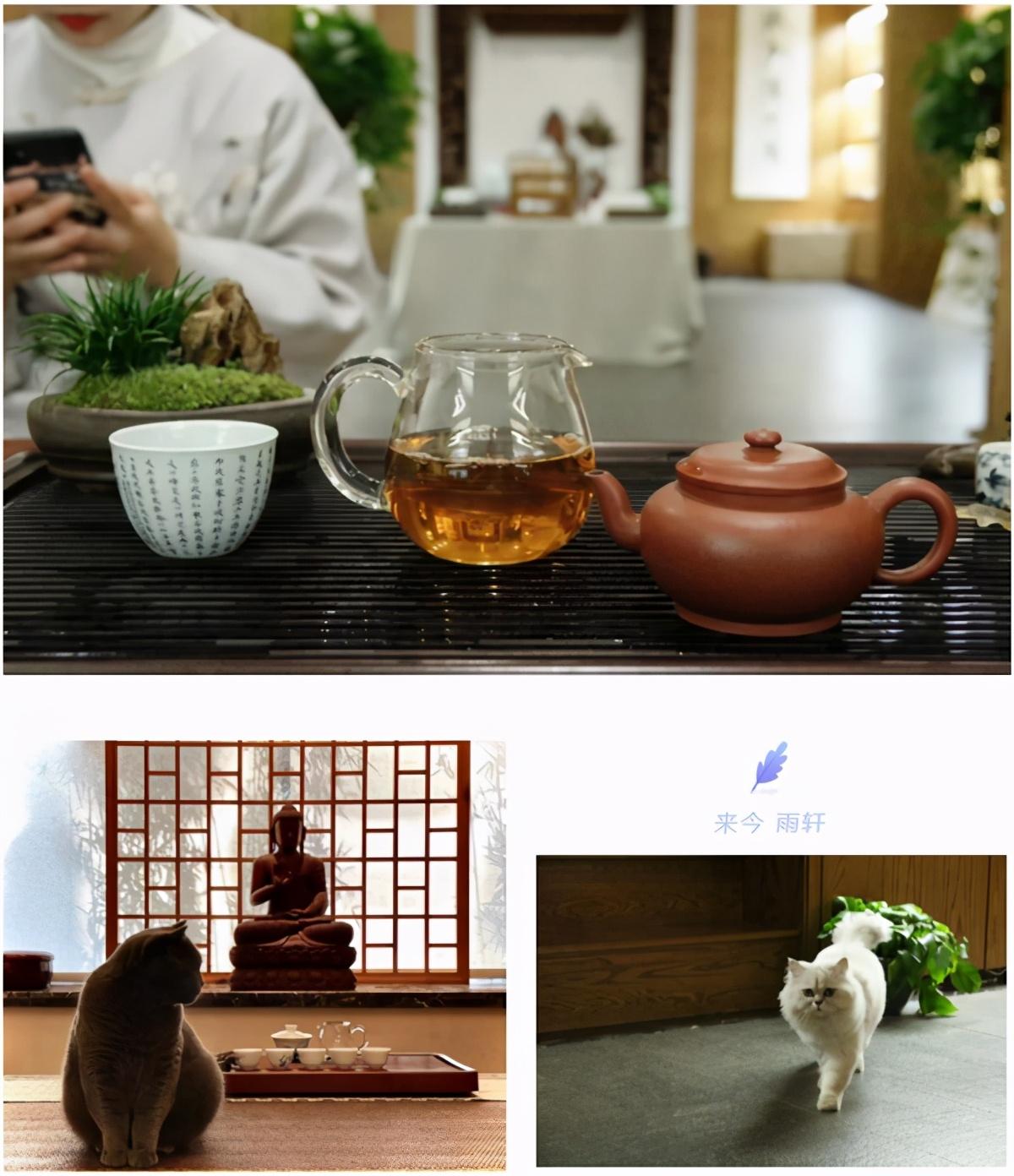 来今雨轩,一家集品茶、书法、茶艺、古琴于一体的茶舍,不容错过