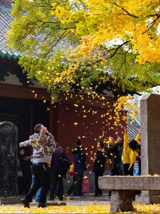 少林寺银杏树——穿越千年的美
