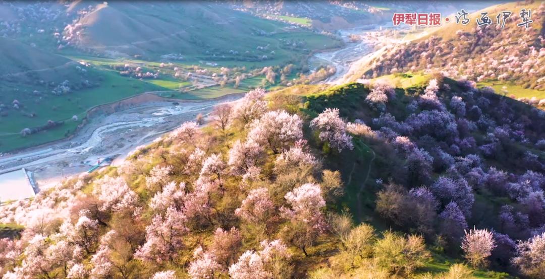 新疆花城伊宁旅游:山花烂漫福寿山