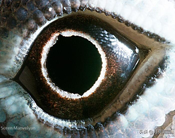 亚美尼亚摄影师的镜头下奇妙的动物眼睛