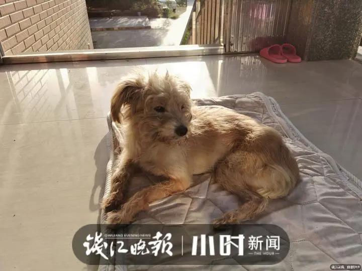 杭州一宠物狗被落服务区,流浪26天找回60多公里外的家