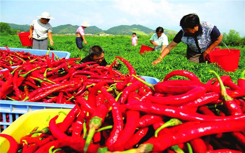 当前农村,种植什么农作物利润高、成本低、稳赚不赔?推荐一些