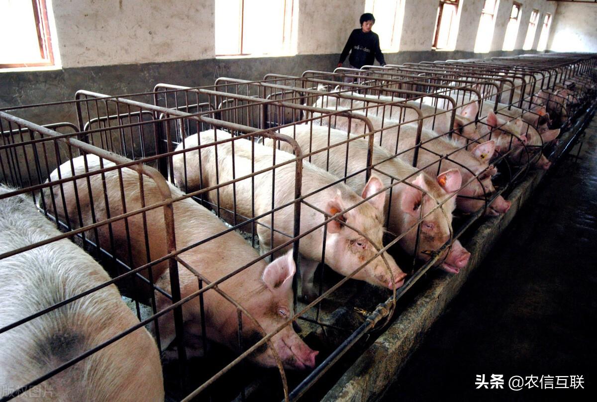 """猪价""""突变"""",河南死亡畜禽约103.7万头!7月27日猪价已更新"""