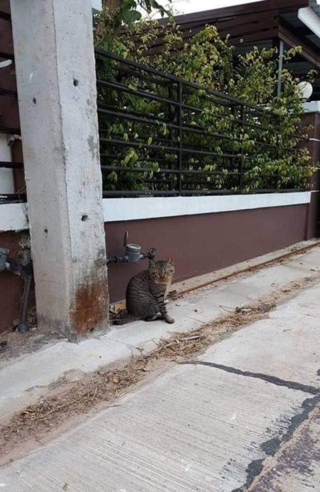 泰国猫咪出走3天带着欠条回家:老盯着我家鱼,给了3条,电联……