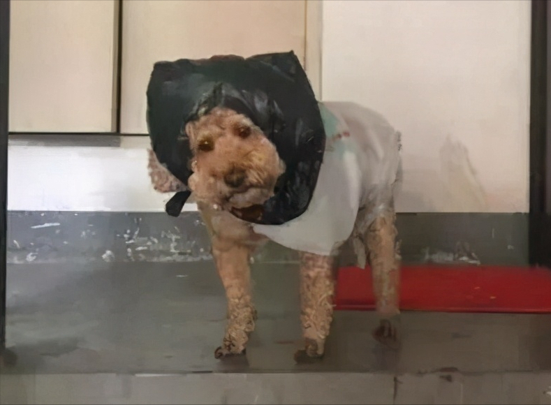 狗狗这7种情况不能洗澡,铲屎官要注意了