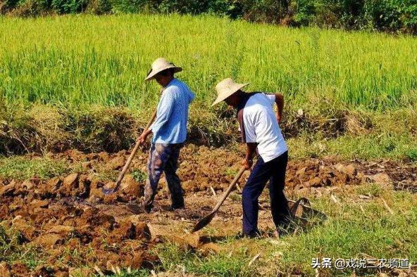 """11月,土地新政出台!4大举措制止耕地""""非粮化""""!农民要重视"""