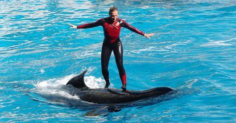 地球上最大的猎杀型巨兽虎鲸,食谱丰富却从来不吃人,什么原因
