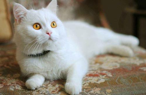 中华田园猫,你能想出来的有多少种?我们口中的小土猫颜值很高的