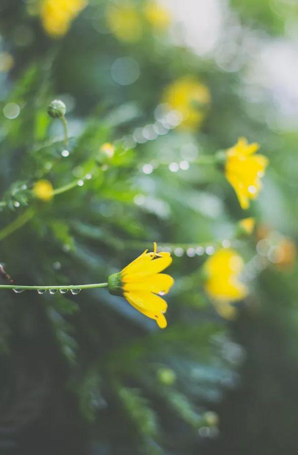 人间最美是相思 几首情词 几首情诗-第6张图片-诗句网