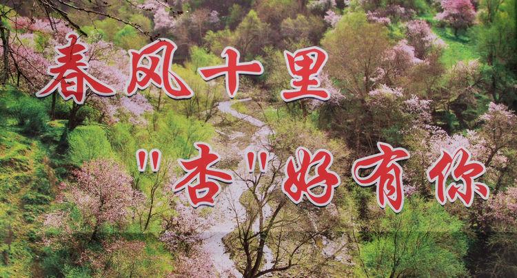 """伊犁河谷""""杏""""好有你-北疆行之七 「闻路微刊 2021-36」 阎春光"""