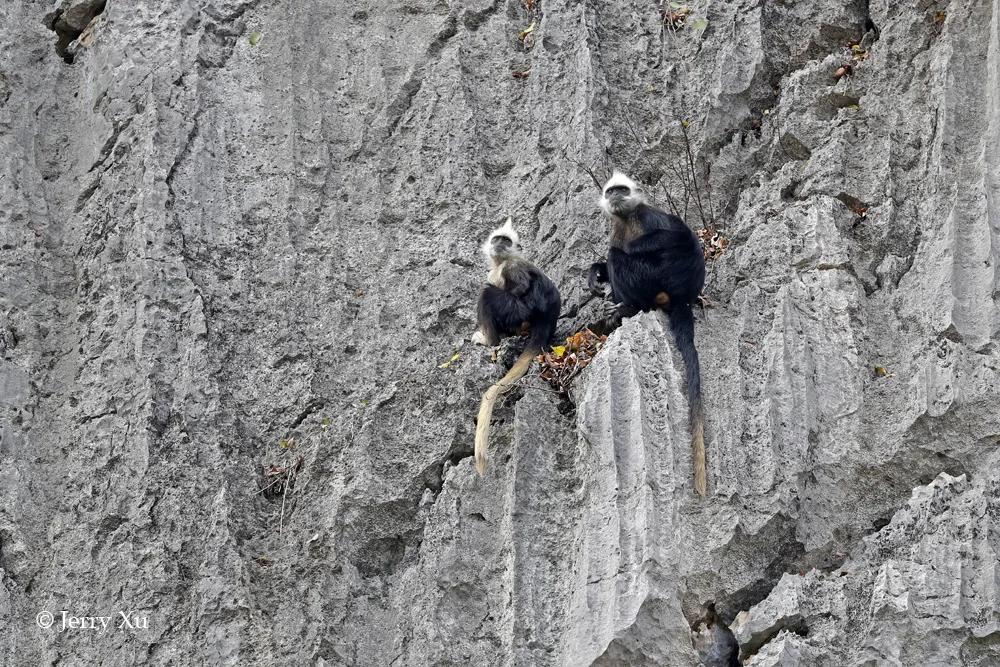 广西不止有桂林,还有一个看鸟看猴看瀑布的秘境