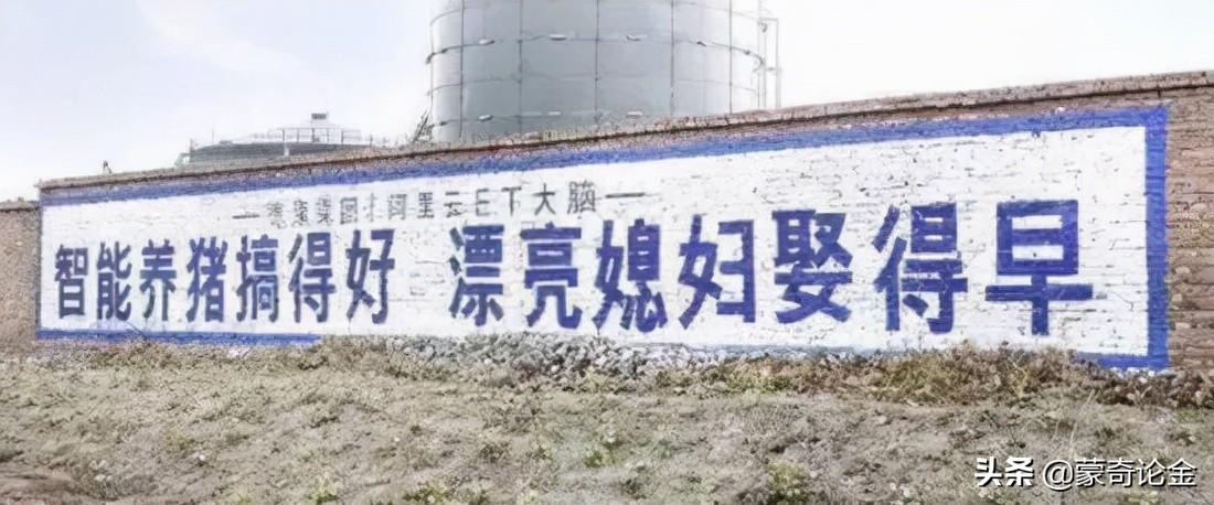 8月猪肉价暴跌45%,为何老百姓不愿意购买?养猪企业赔了多少钱?