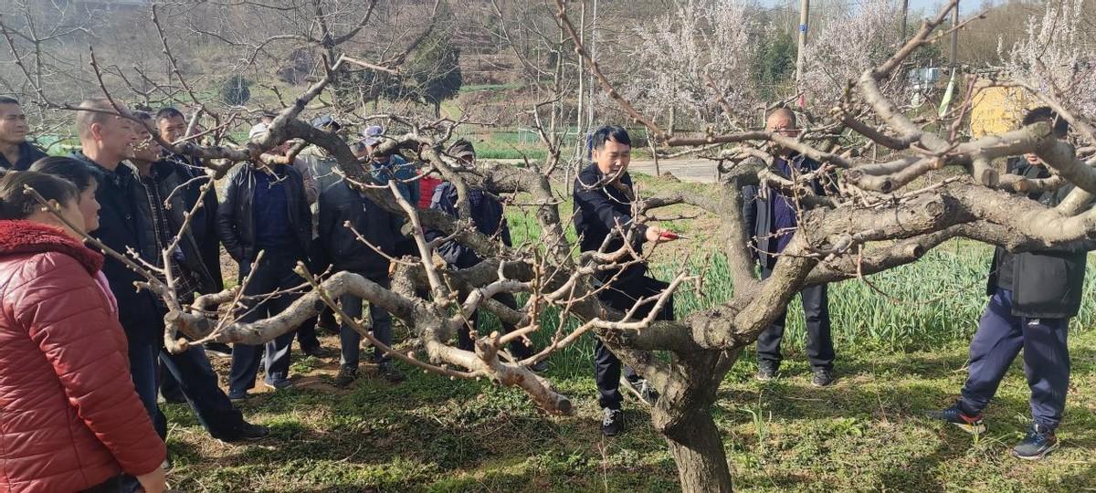 渭滨区石鼓镇:抢抓农时 全力做好春季农业生产