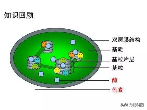 光合超复合体结构,向揭开光合作用的秘密又迈进一大步!