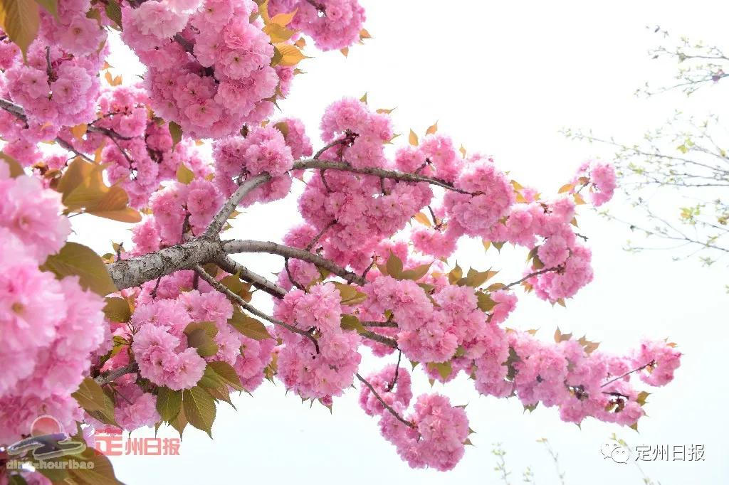 春光正好,收藏版的博陵公园二期来了