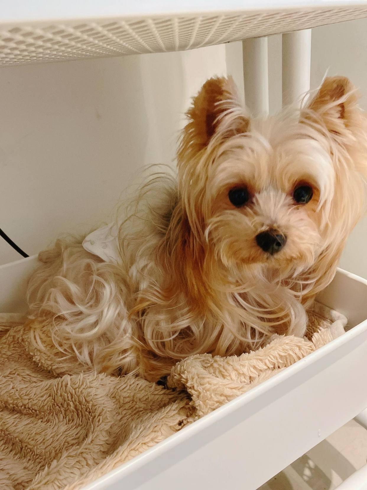 """主人带""""流浪狗""""来美容还要弃养,好心人收养后发现是超美狗狗"""