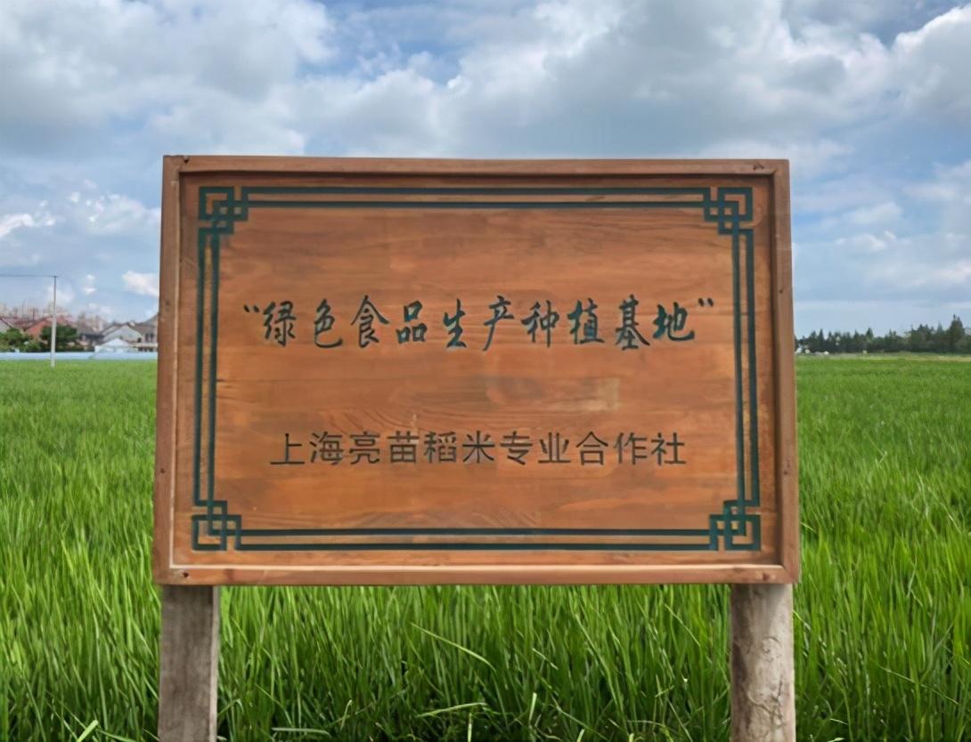 """上海""""亮苗大米""""入围央视广告精选,权威展播"""