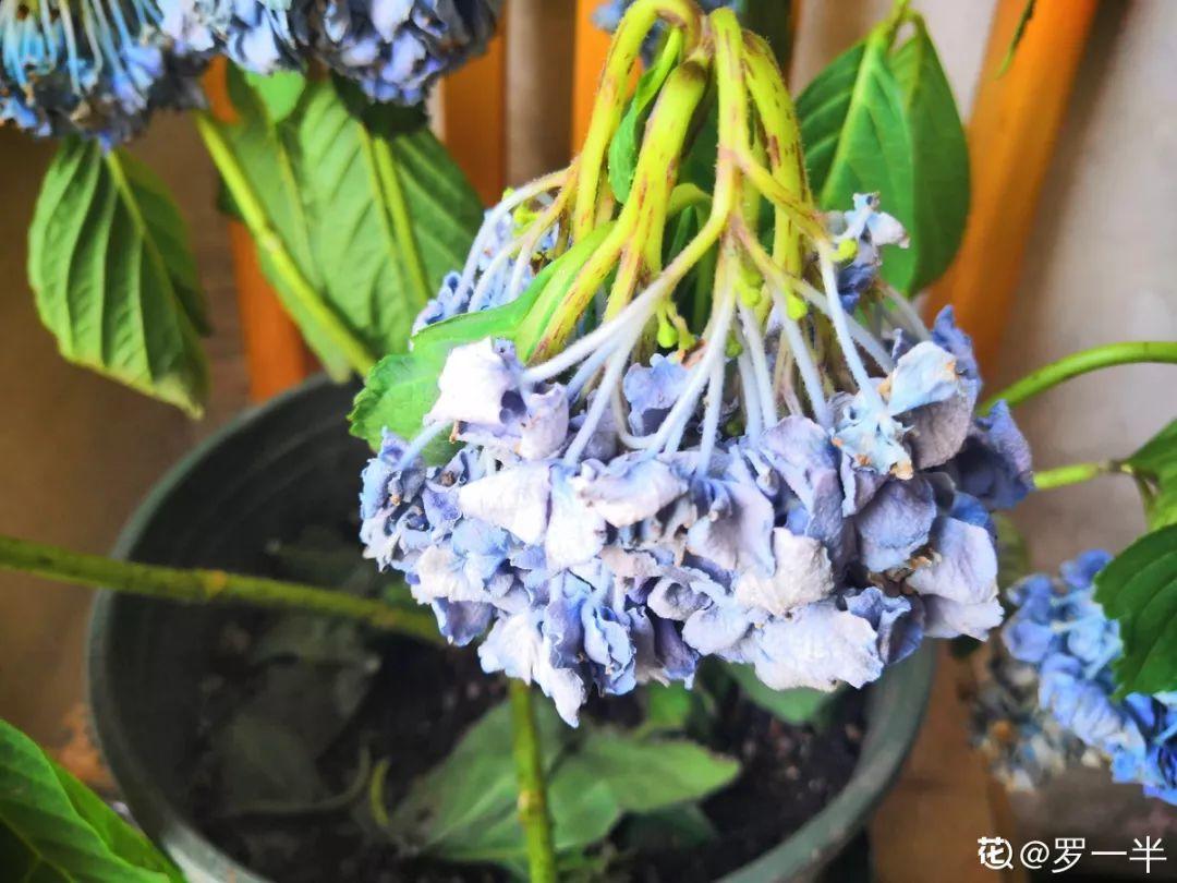 6个养花实用小窍门,业余爱好者的秘籍,养好花并不难 养花小窍门 第14张