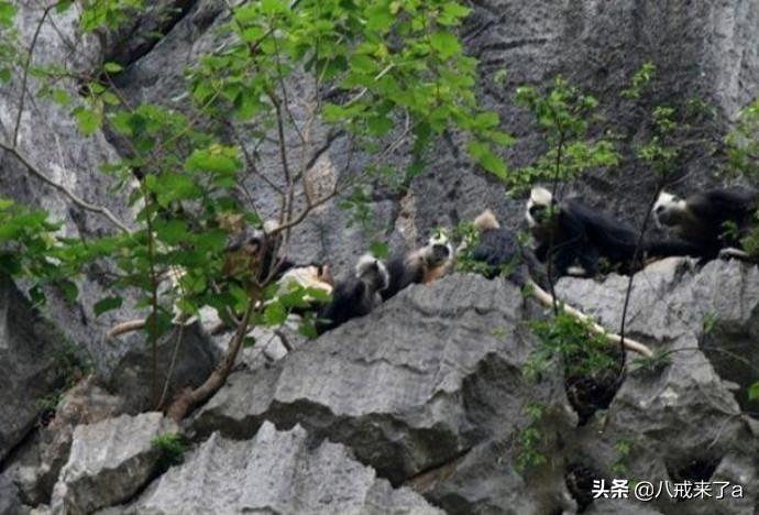 广西崇左宁明县六个值得一去的旅游景点,有时间一定去看看