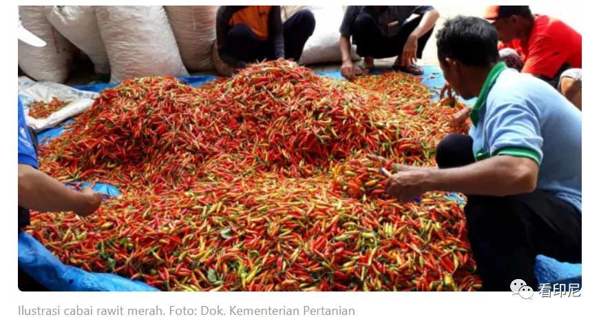 印尼市场向天椒价格飞涨
