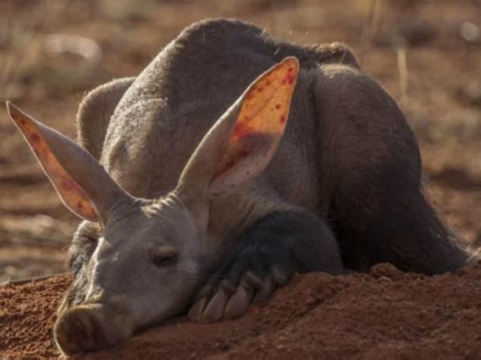 動物趣談:僅一己之力,解決整個非洲動物的住房問題
