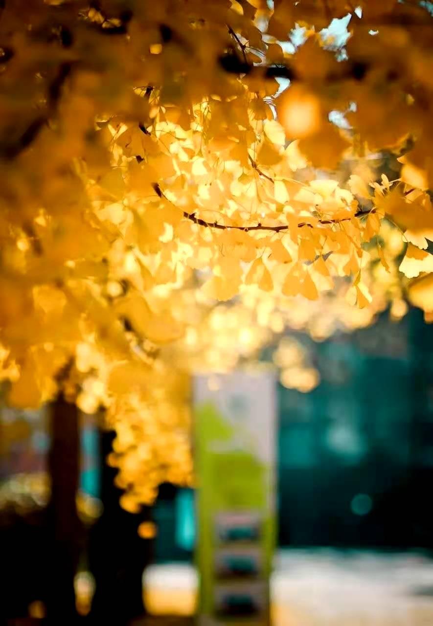 「落葉不掃」的上海,才是她最美的樣子