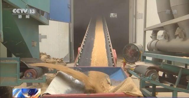 夏粮收购全面展开今年主产区小麦普遍质优价高