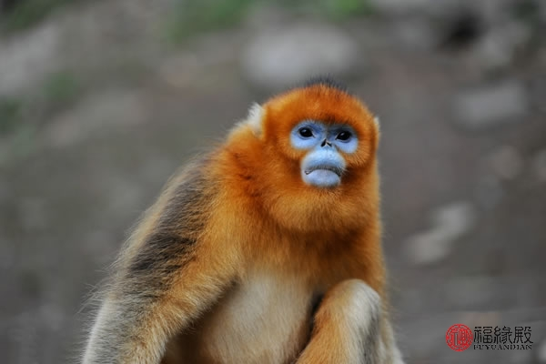 92属猴2019年能结婚吗 属猴运势怎样
