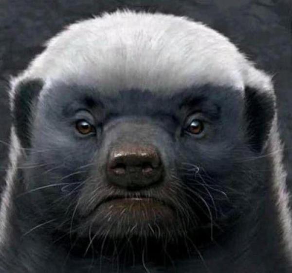 动物界第一网红平头哥:生死看淡 不服就干,人狠话不多的硬茬