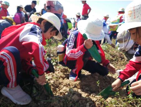 挖番薯、搭帐篷…禅城区玫瑰小学秋季研学活动欢乐多
