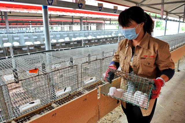 申請從事野生動物的飼養、銷售,是否需要前置許可?