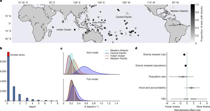 """全球20%珊瑚礁中的鲨鱼已经 """"功能性灭绝""""-第2张图片-IT新视野"""