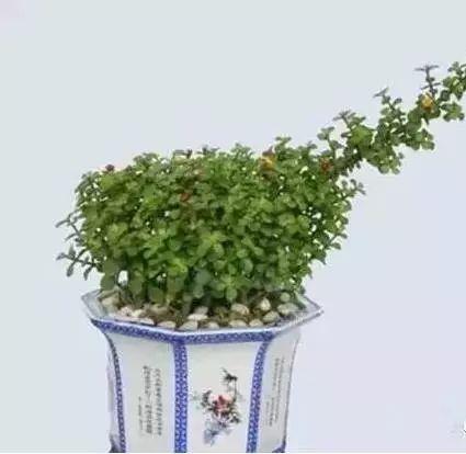 养花大全45集,收藏起来,什么花都能养好 家务卫生 第9张