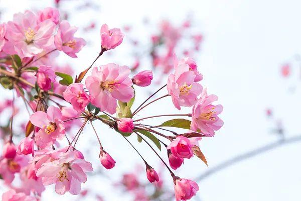 养花大全45集,收藏起来,什么花都能养好 家务卫生 第33张