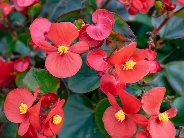 养花大全45集,收藏起来,什么花都能养好 家务卫生 第44张