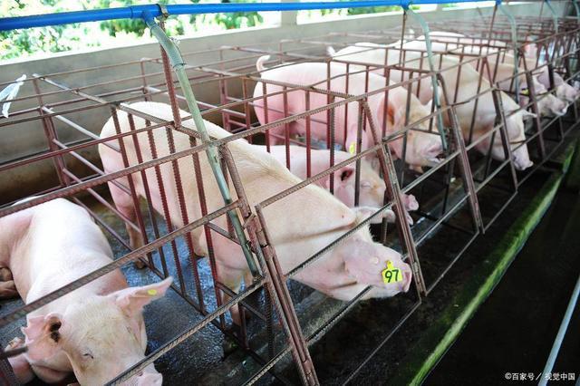 海大集团:总投资4亿元,广东云浮又增两个大型生猪养殖场
