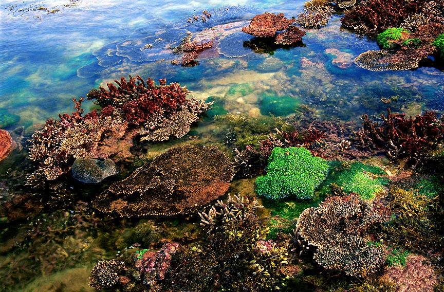 海洋萌宝频光顾,生态旅游成北海新名片