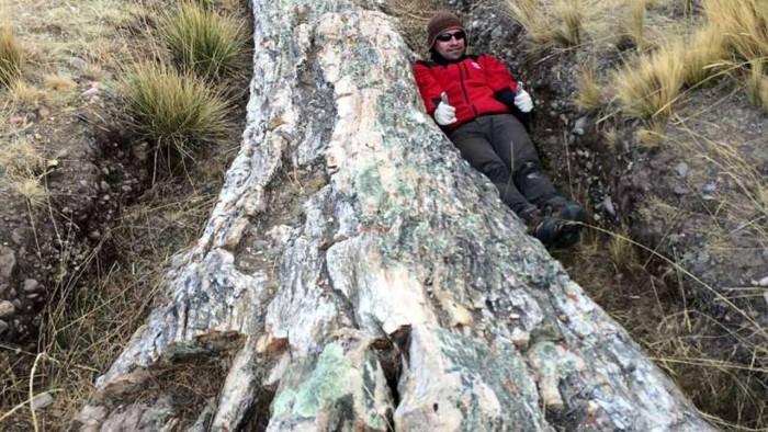 科学家在秘鲁发现树化石,揭示过去1000万年环境变化-第1张图片-IT新视野