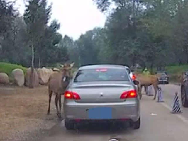 北京野生动物园游客给动物喂口罩?警方通报来了