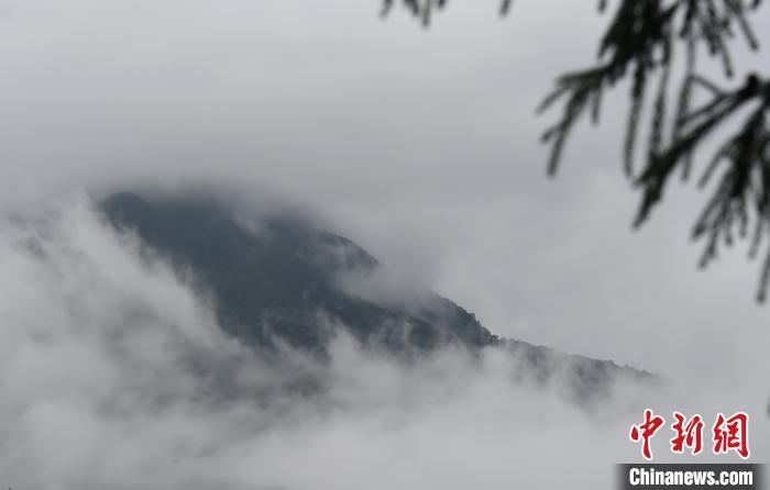 重庆金佛山雨雾缭绕宛如一幅水墨画