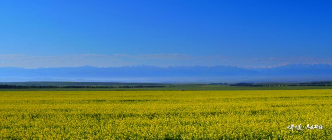 世界之美 尽在新疆|每一帧都是大片,这样的新疆你能不爱吗?