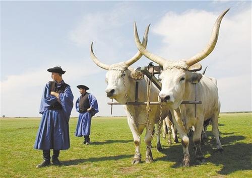 匈牙利国宝牛肉期待中国大市场