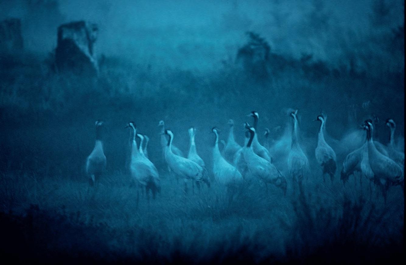 如何拍荒野里的精灵?听野生生物摄影年赛冠军怎么说