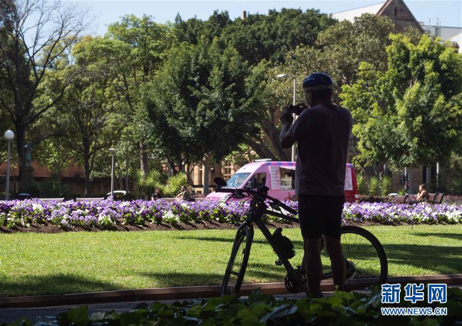 悉尼:疫情下的春天