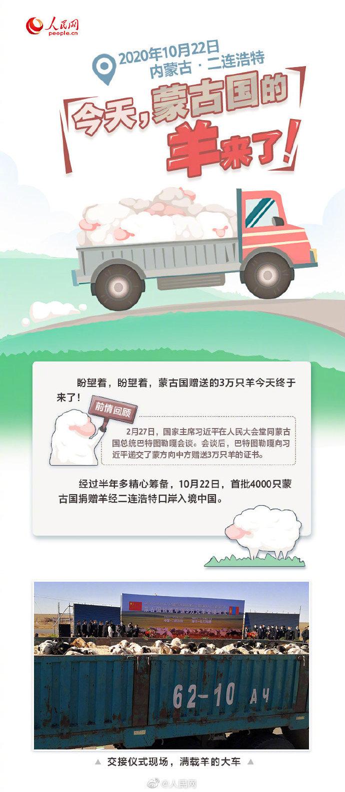蒙古国捐赠的3万头羊来了!你想知道的都在这
